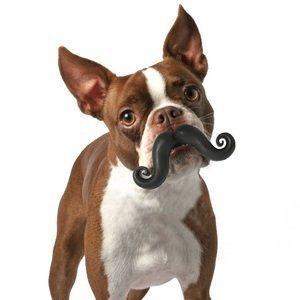 Jouet moustache pour chien