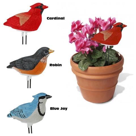 Cliquez ici pour acheter Hygromètre Plant Pal