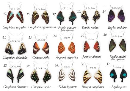 Boucles d'oreilles avec vraies ailes de papillon