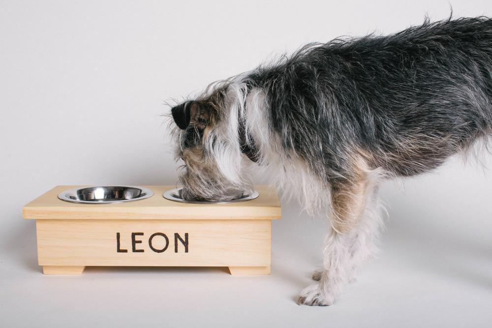 Mangeoire pour chien personnalisé