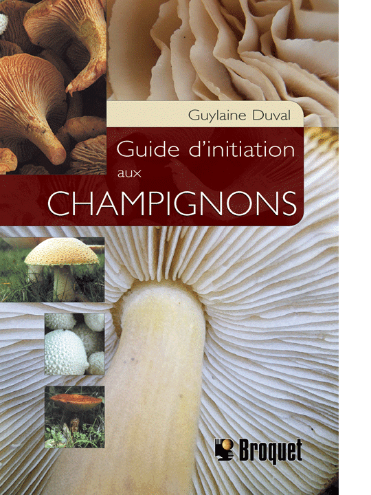 Guide d'initiation aux champignons