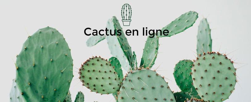 Un cactus, un cadeau original à offrir & recevoir!