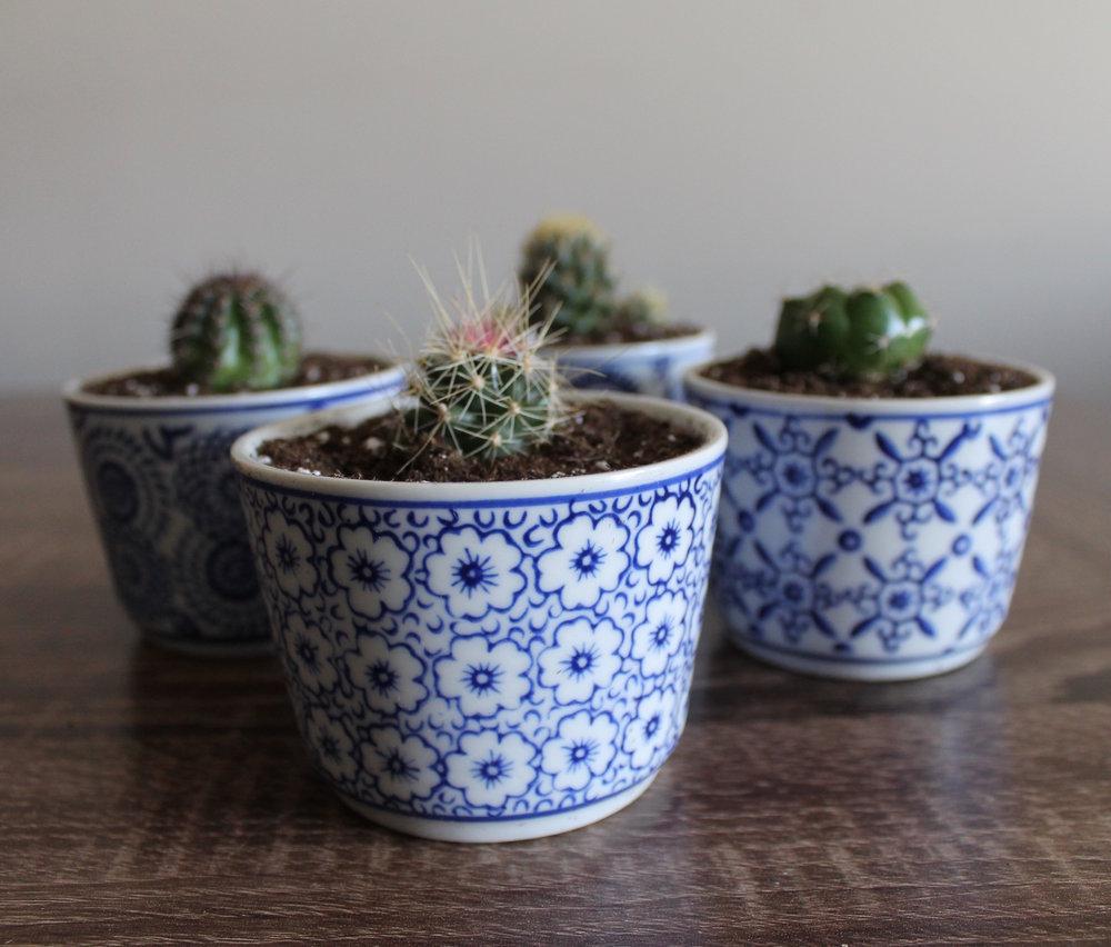 Ensemble de 4 pots et 4 succulents
