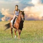 Forfait - Ranch Massif du Sud