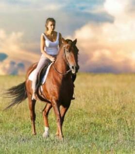 Forfait – Ranch Massif du Sud