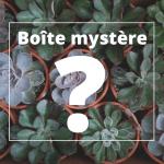 Cactus - Boite mystère!