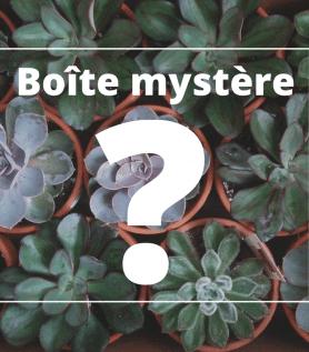 Cactus – Boite mystère!
