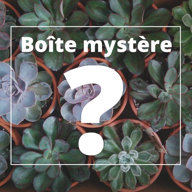 Cliquez ici pour acheter Cactus – Boite mystère!