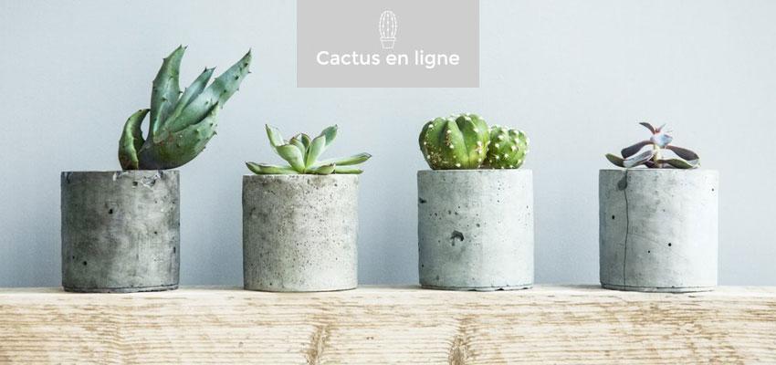 cactus fleurs plantes livraison id e cadeau qu bec. Black Bedroom Furniture Sets. Home Design Ideas