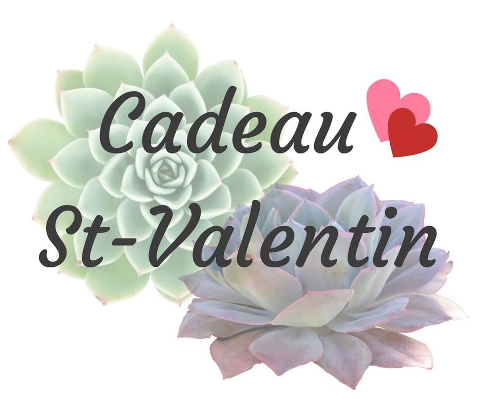 Plantes succulentes pour la Saint-Valentin!