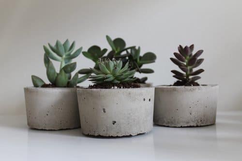 Trio de mini cactus