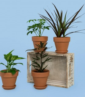 Quatuor de plantes tropicales