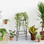 Ensemble de plantes Champs des Possibles