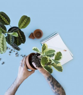 Cours – Plantes pour les nuls