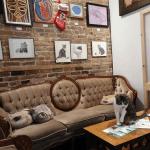 Forfait - Café chat l'heureux