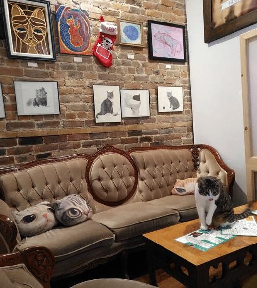 Forfait – Café chat l'heureux