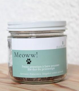 Pot à faire pousser – Meow!!! (blé dur)