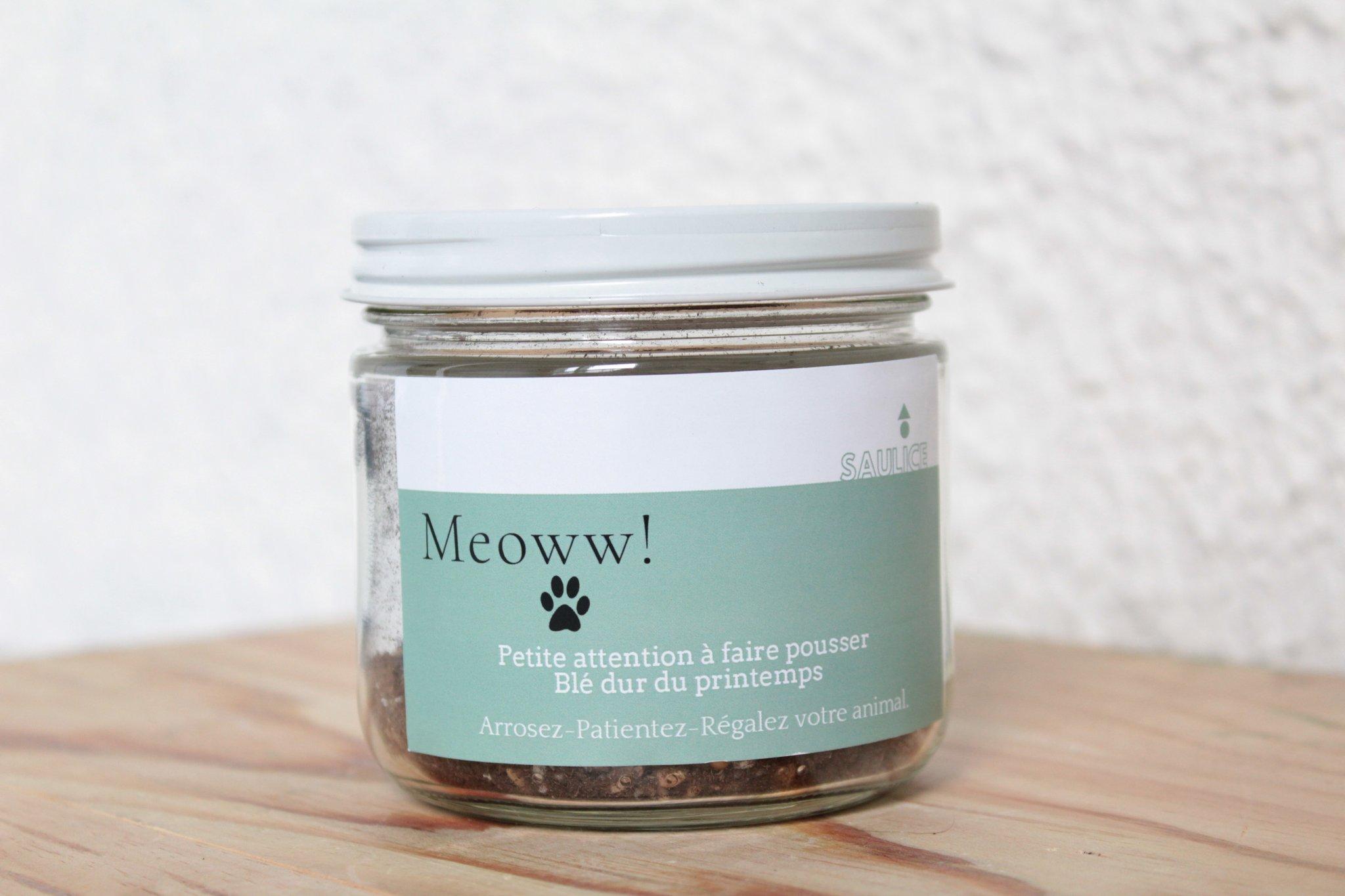Cliquez ici pour acheter Pot à faire pousser – Meow!!! (blé dur)