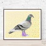 Affiche - Pigeon en Converse
