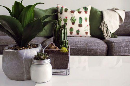 Cactus en ligne Cactus & succulentes 🌵