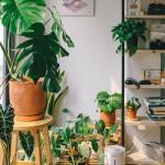 Plantes tropicales - Livraison à domicile