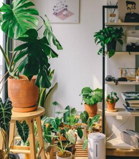 Plantes tropicales – Livraison à domicile