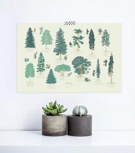 Affiche Arboretum – Arbres du Canada
