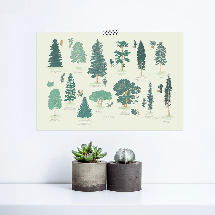 Cliquez ici pour acheter Affiche Arboretum – Arbres du Canada