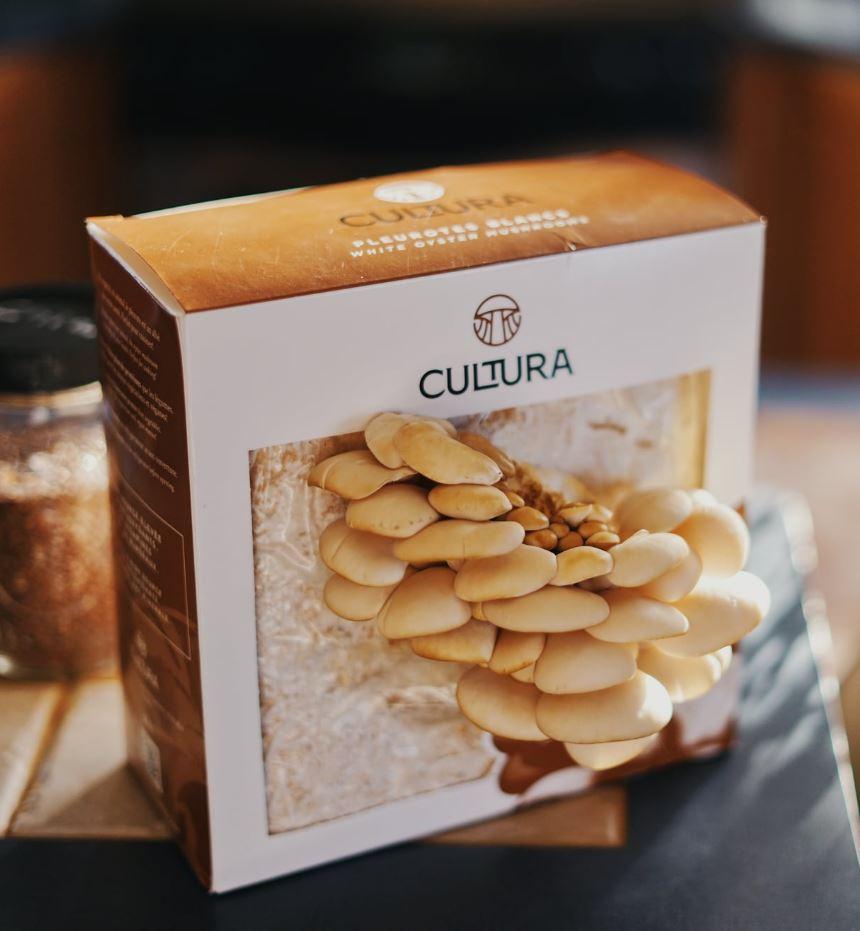 Cliquez ici pour acheter Culture de champignons maison – Pleurotes blancs