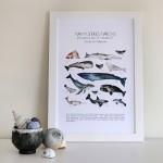 Affiche - Mammifères marins du Golfe du St-Laurent