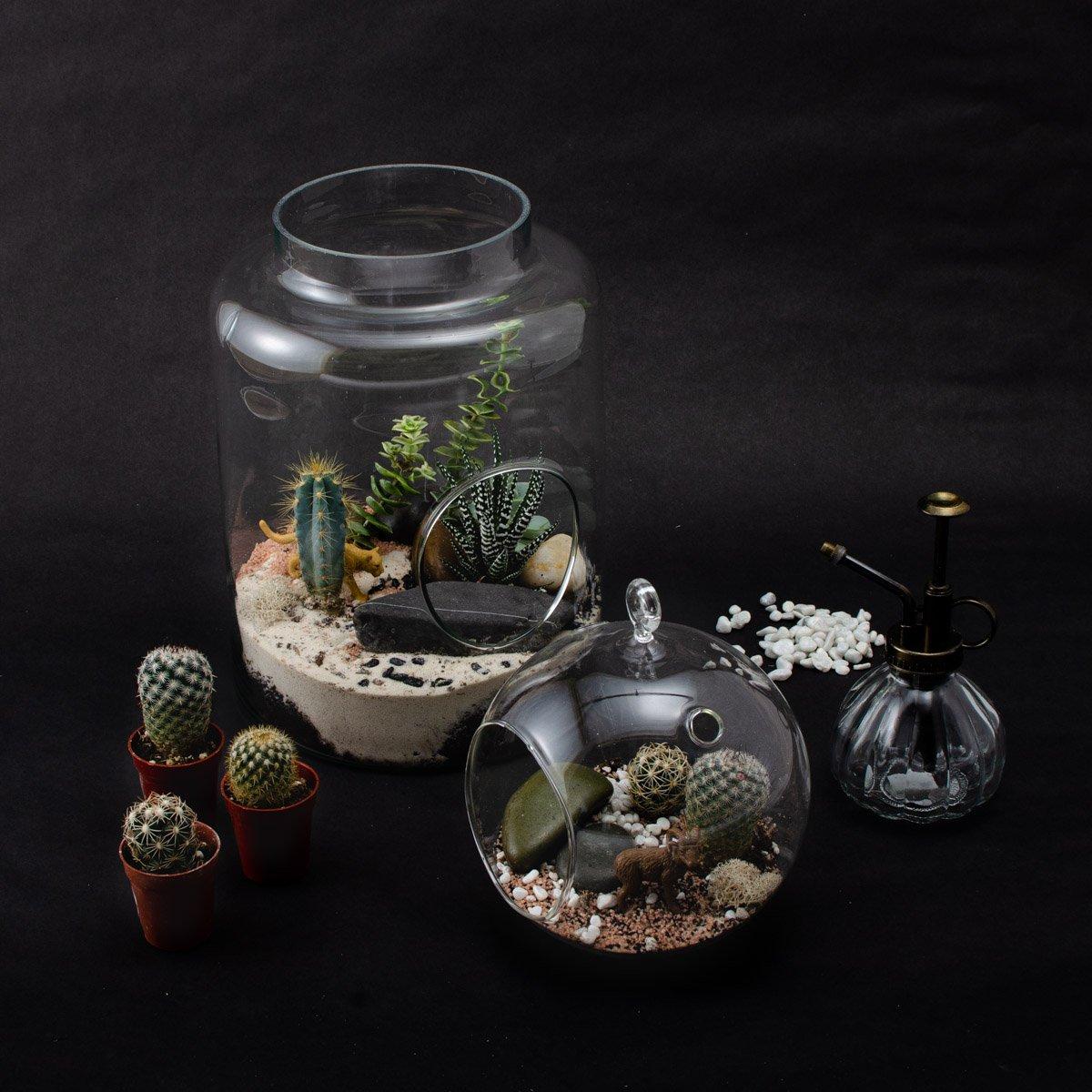 Cliquez ici pour acheter Ensemble pour terrarium complet